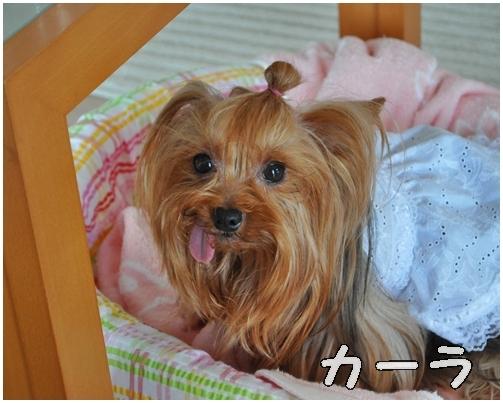 4_20120807064036.jpg