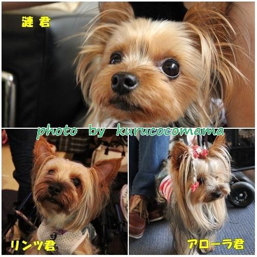 5_20121211221103.jpg