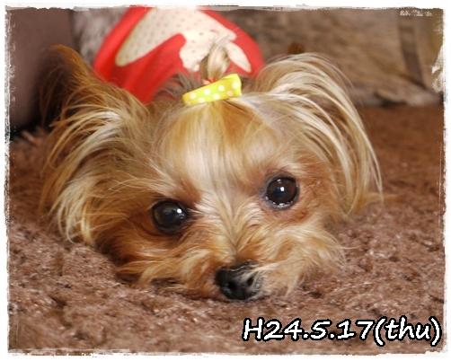 6_20120518072944.jpg