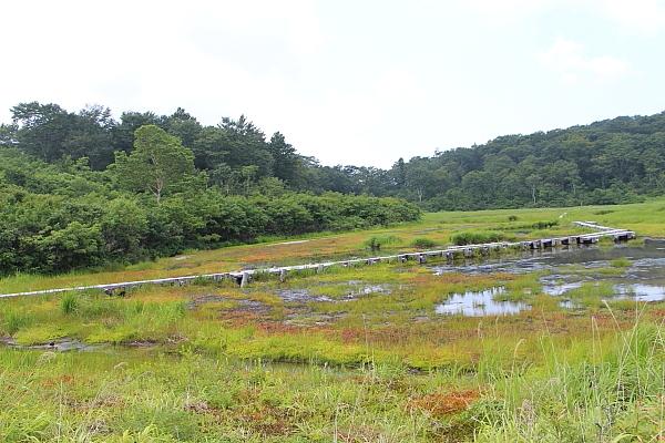 14イワカガミ湿原2