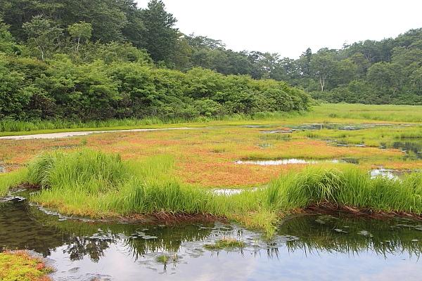 14イワカガミ湿原4