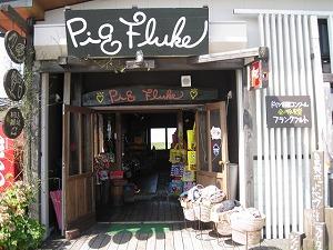 kumamoto-pig-fluke2.jpg