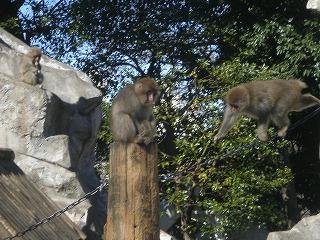 ueno-zoo104.jpg