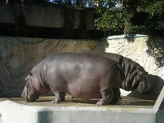ueno-zoo146.jpg