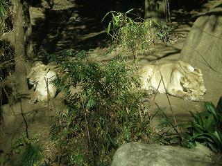 ueno-zoo80.jpg