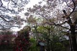 2012,4,30萬花楼桜 103