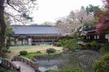 2012,4,30萬花楼桜 089