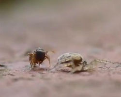 Ant vs Spider