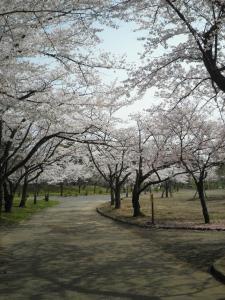 お花見2012-02