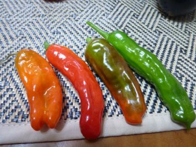 新種の野菜?!