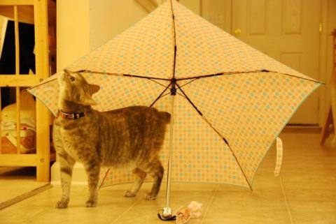 雨のにおい?