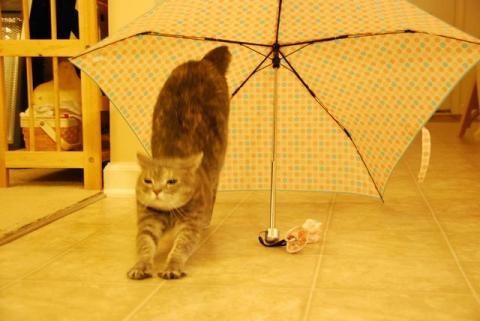 雨はいやでちゅ