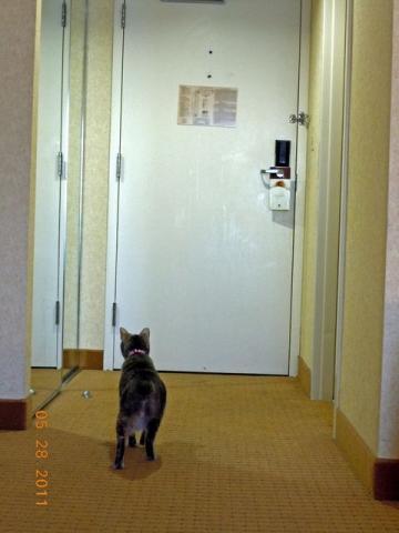 廊下が気になる!