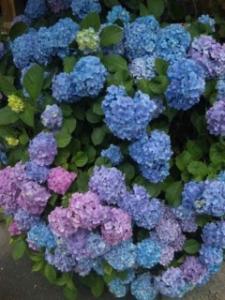 fc2blog_201206281945512e7.jpg