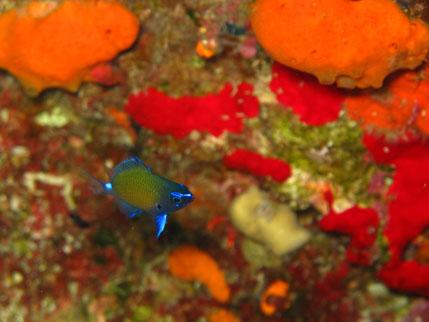 120516,divingservice.marefans