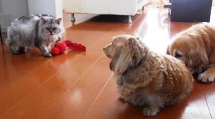 猫のおもちゃない