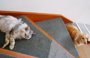 階段上れない