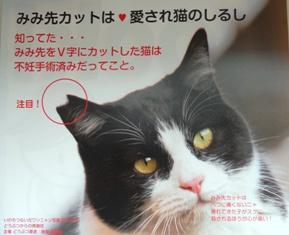 耳先カットポスター