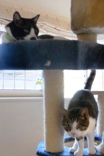 だんともん猫タワー