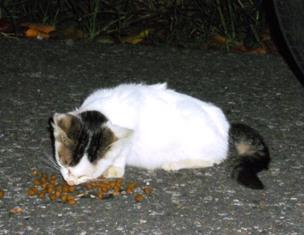 TNR川越子猫