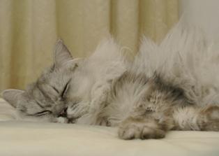 今日の風馬夜寝てる