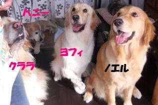 4ゴールデン