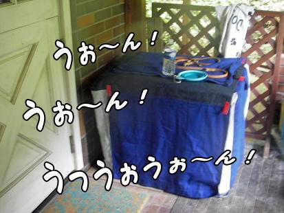 IMGP0365-20120811-1051-1.jpg