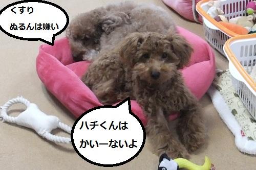 ナナ姫&ハチ公