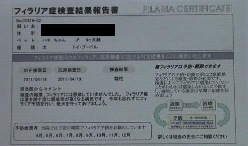 フィラリア症検査結果