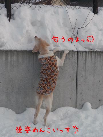 2_20110127220237.jpg