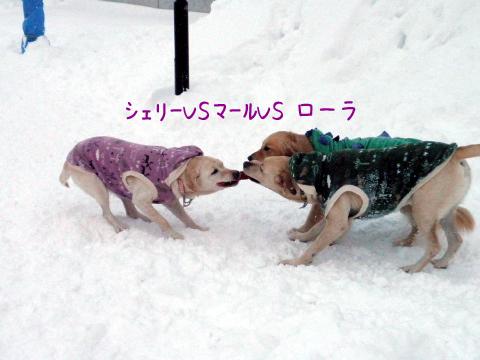 3wan1_20110108182157.jpg