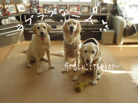 3wan2_20110121214208.jpg
