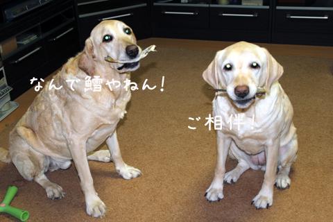 V2_20110214232004.jpg