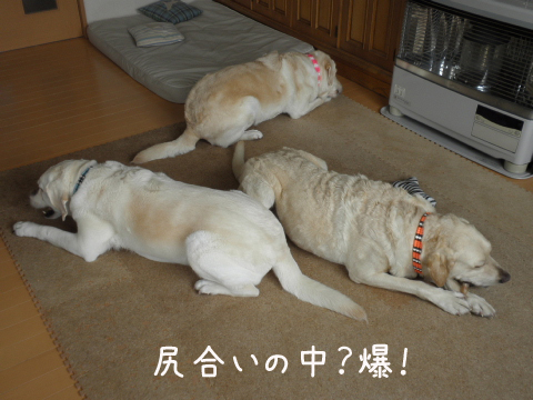 akiresu.jpg