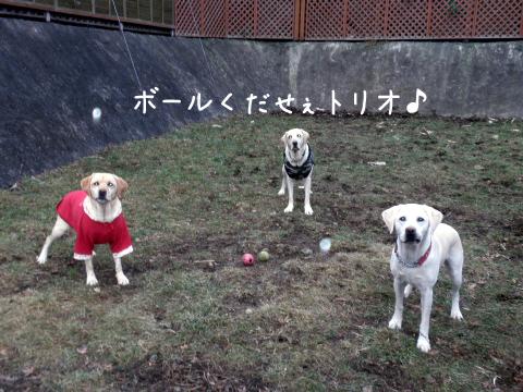 ball_20101207225857.jpg