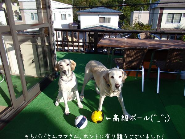 ball_20140929151726a1e.jpg