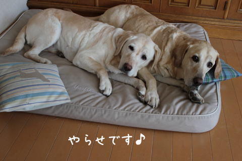 bed1_20110226232811.jpg