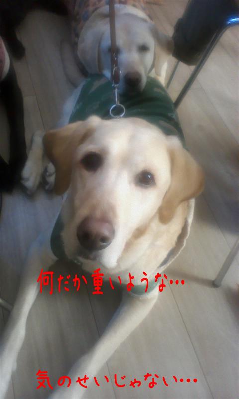 cafe1_20110211223646.jpg