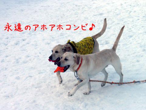 daimaru_20110226231901.jpg
