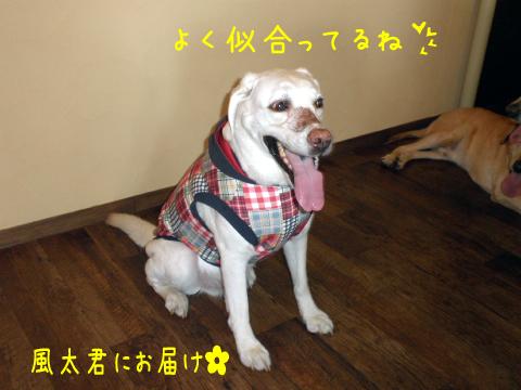 fuuta_20100917211447.jpg