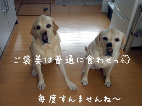gohoubi_20110224173111.jpg