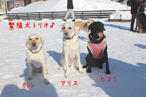 hansyoku.jpg