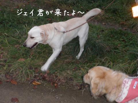 j_20101025195716.jpg