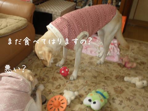 kotosyeri1.jpg