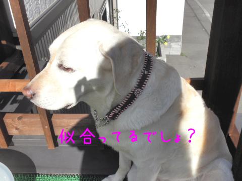 kubiwa11.jpg