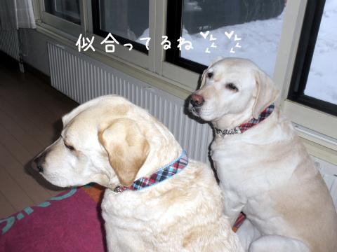 kubiwa1_20110228220905.jpg
