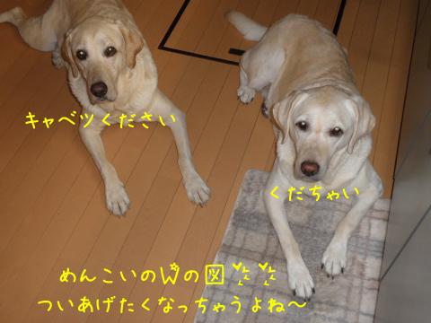 kudasai_20100824212955.jpg