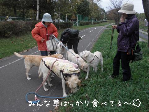 kusa_20101013182623.jpg