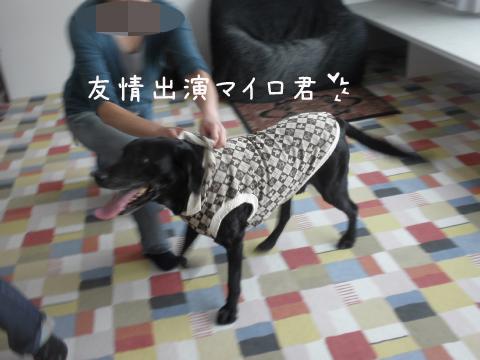 mairo_20110118190627.jpg