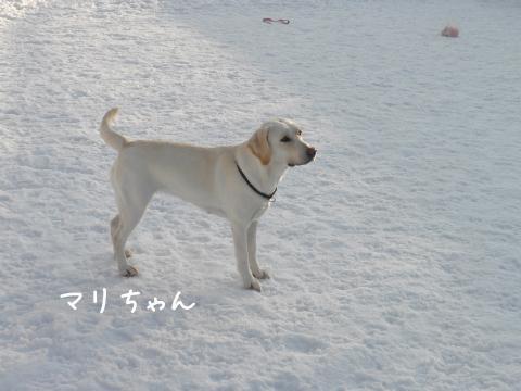 mari_20110222225427.jpg